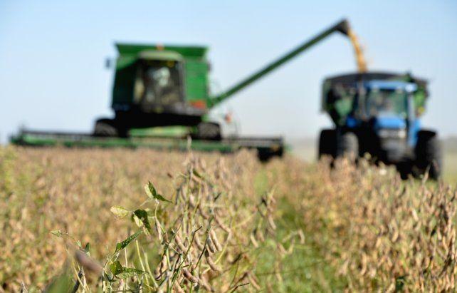 Soja. El precio de la oleaginosa volvió a saltar en el mercado de Chicago por un informe del Usda.
