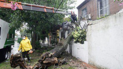 Por la tormenta, un árbol cayó sobre una casa y dejó atrapada a una pareja de adultos mayores