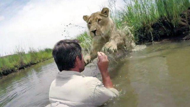 El emotivo abrazo de una leona al hombre que la salvó tras ser abandonada