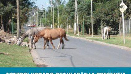Los caballos sueltos son una preocupación constante de los vecinos.