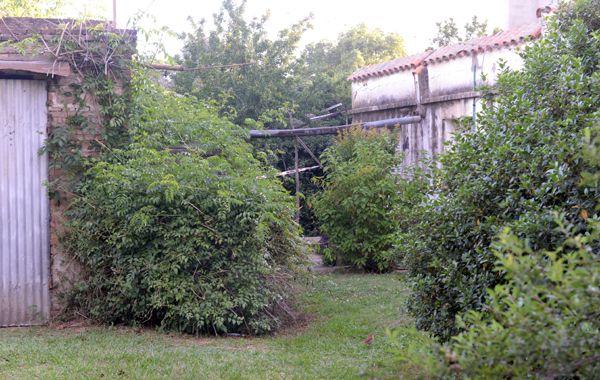En la casa del hombre funcionaba un vivero de su propiedad. (foto: Silvina Salinas)