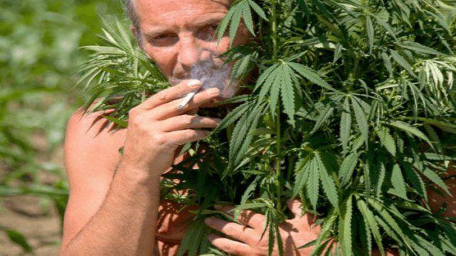 Canadá busca catadores de marihuana en vísperas de la legalización
