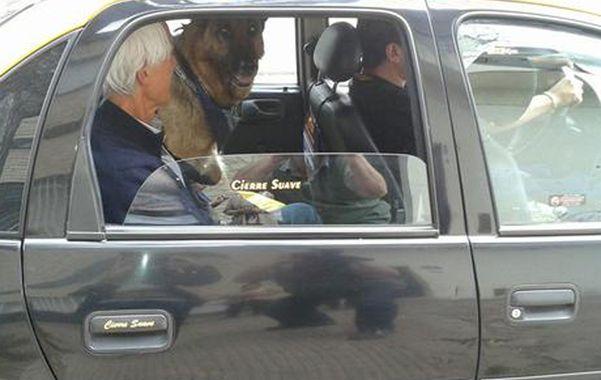El concejal veterinario también insiste con que las mascotas pequeñas vayan en ómnibus.