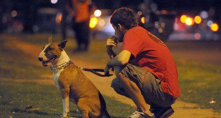 Crearán un registro de criadores de perros potencialmente peligrosos