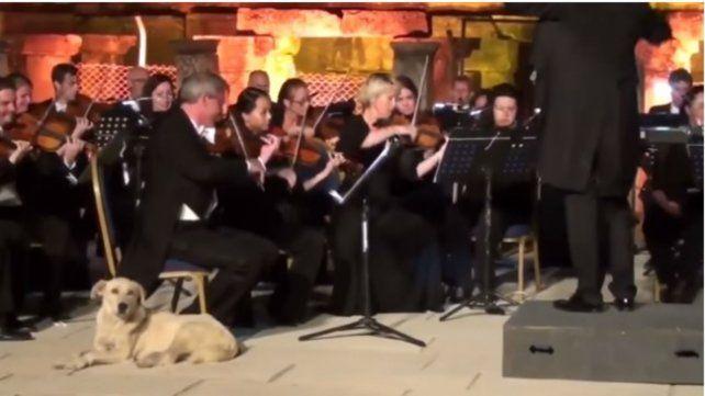 El privilegiado lugar que ocupó un perro callejero para escuchar un concierto de música clásica