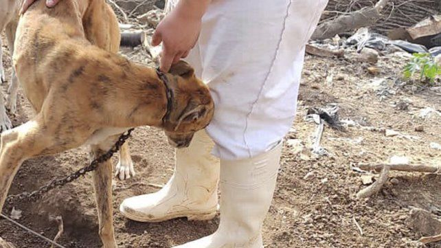 Maltrato animal: denuncia de vecinos permitió rescatar a un galgo víctima de castigos