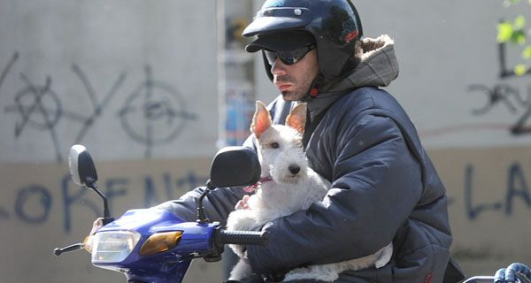 Llevan hasta al perro en moto, a veces hasta los mismos policías van sin casco