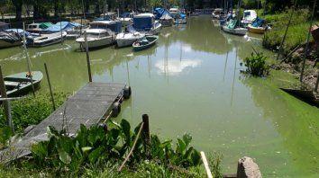 Así luce el río Paraná en el Delta (Gentileza: Impacto Local).
