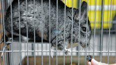 el-diputado-troncoso-pide-proteger-la-salud-integral-los-animales