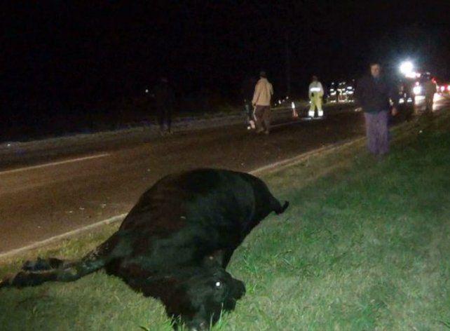 Chocó contra una vaca de 400 kilos en la ruta 33 y sólo sufrió daños materiales