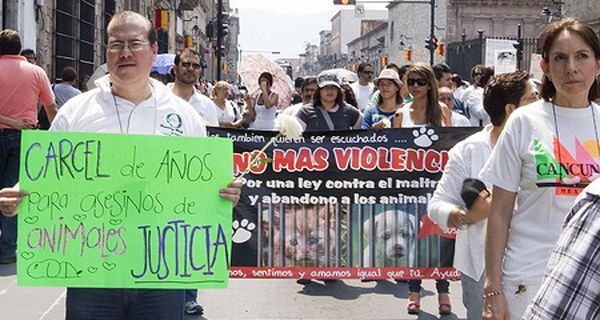 Vecinos de barrio Belgrano fueron a Tribunales y denunciaron a un mata perros