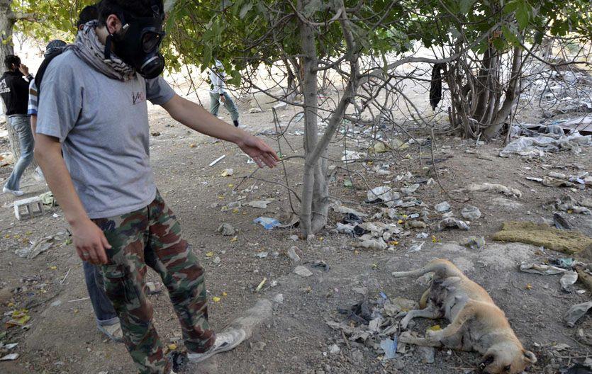 Evidencias. Un rebelde señala a un perro víctima de los gases en Damasco.