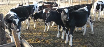 Para Federación Agraria, la producción lechera se está cayendo a pedazos
