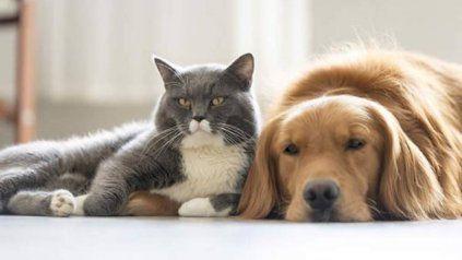 La mayoría de los perros y gatos son asintomáticos.