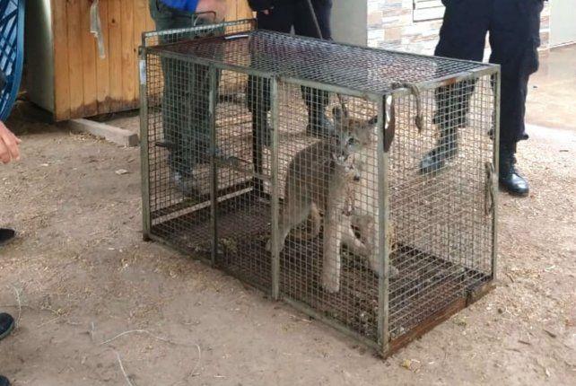 Muchos de los animales resctados fueron devueltos a sus hábitat.