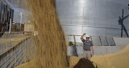 El precio de la soja en Rosario alcanzó su mayor nivel histórico