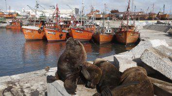 El Puerto. Es fácil encontrarse con lobos marinos en el paseo