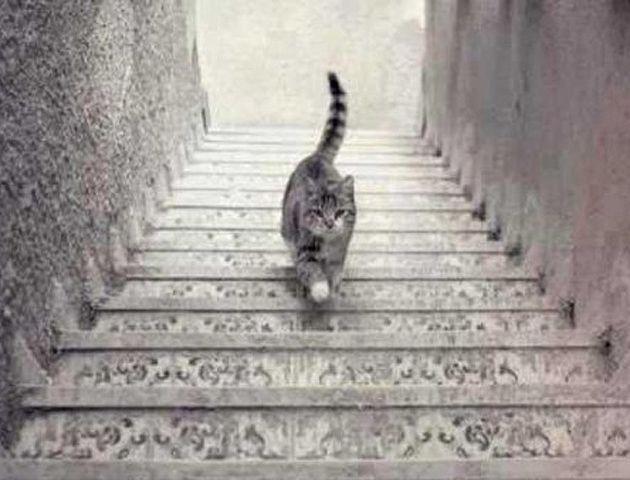 ¿El gato sube o baja?