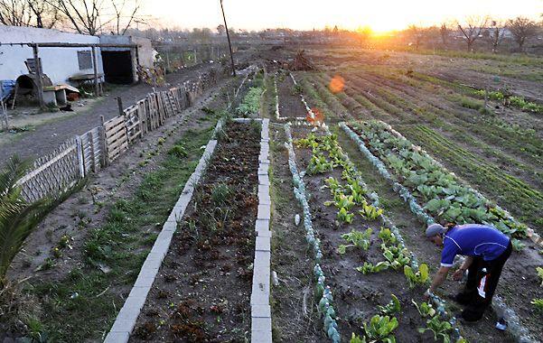 Relevamientos oficiales estiman que quedan apenas unos 40 pequeños productores de verduras en Rosario.