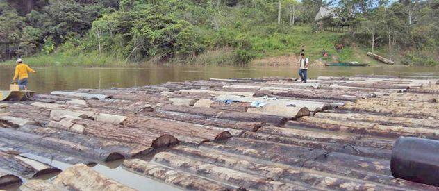 Paisaje de una zona de Perú cerca de la frontera con Brasil donde se transportan varias especies.