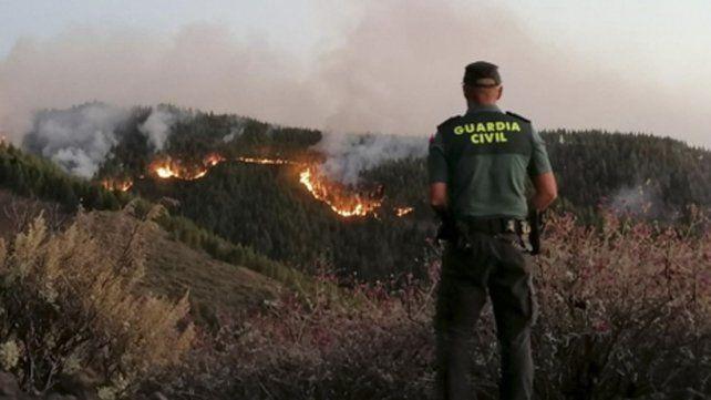 Desastre. El fuego avanza hacia el autóctono pinar de Tamadaba.
