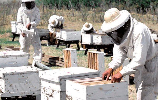 Ayuda. Se especificó que uno de los primeros pasos será generar una solución a la dura realidad de la apicultores de la zona.