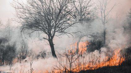 El incremento de los incendios forestales estaría relacionado con el aumento del calor atrapado en la Tierra.