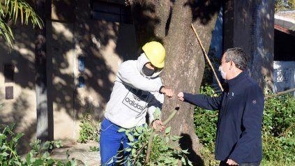 El plan de poda municipal alcanzará a 40 mil árboles en toda la ciudad de Rosario