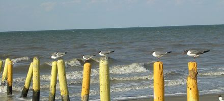 Texas: en busca de las aves