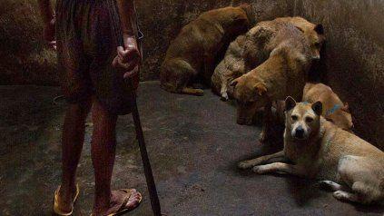 El imputado, un joven de 23 años, fue acusado de maltrato y crueldad animal.