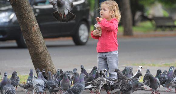 Advierten que las palomas están cerca de ser una plaga