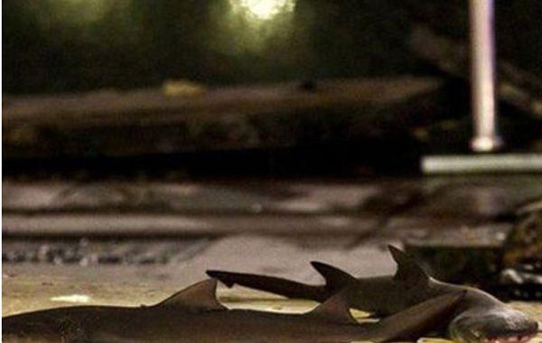 Las imágenes de la explosión en un acuario de Shangai en el que murieron tres tiburones
