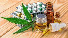 El cannabis y su uso para tratamientos.