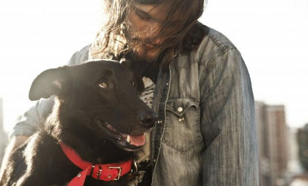 Un viaje de perros