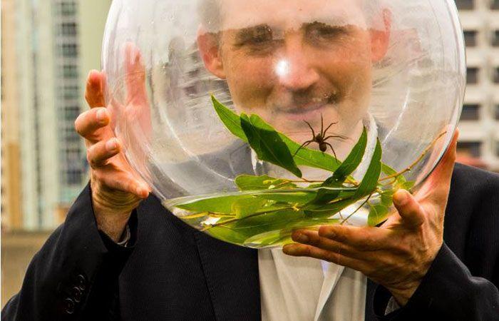 Esta nueva especie ha sido capturada en Australia.