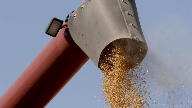 La soja cerró la semana en Rosario a US$ 330 la tonelada.