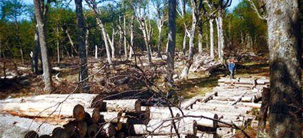 La vida vale: frenar la deforestación cuesta millones de dólares