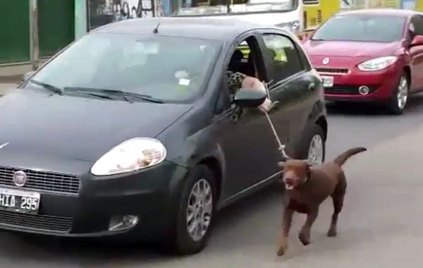 Multaron a una mujer por pasear a su perro atado al auto en Neuquén