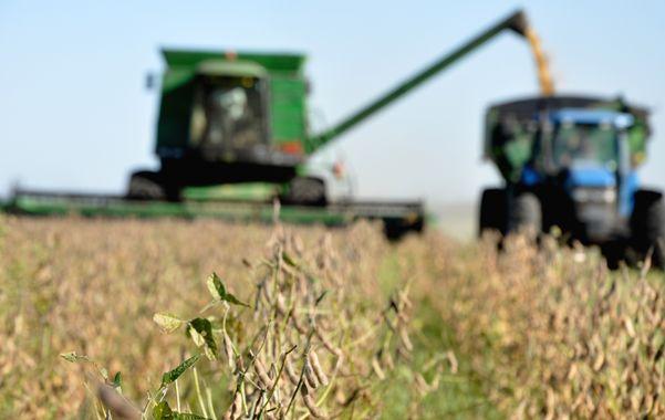 Agrodólares. El campo acelera la liquidación de divisas por exportaciones.