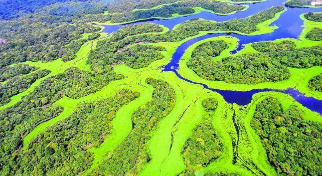 Mágico y serpenteante. El río Negro es uno de los ecosistemas más ricos y más importantes en la Amazonia brasileña.