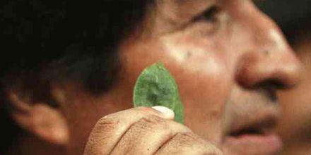 Evo Morales pide despenalizar la coca masticando una hoja ante la ONU