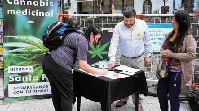 buena recepción. Los rosarinos firmaron ayer a favor del cannabis.