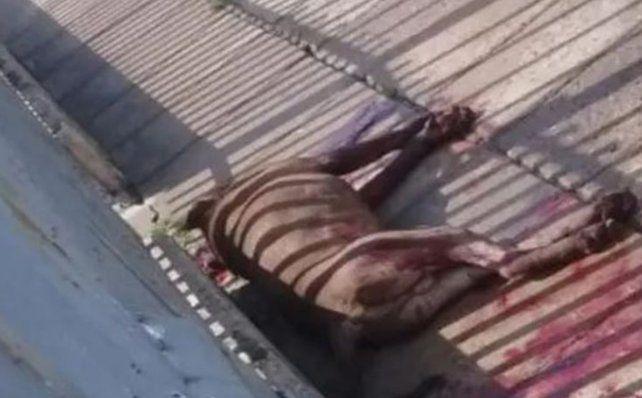 Un pitbull atacó a cinco vecinos y a un policía, que lo mató de dos disparos