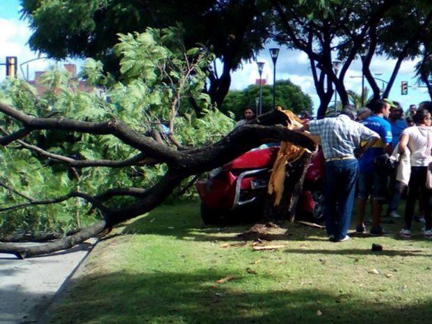 La imagen final de la camioneta tras derribar el árbol en Oroño al 5800. Foto: @JuuliianAgustin.