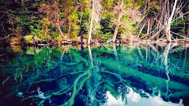 Lago Traful. El bosque sumergido es parte de un deslizamiento del borde