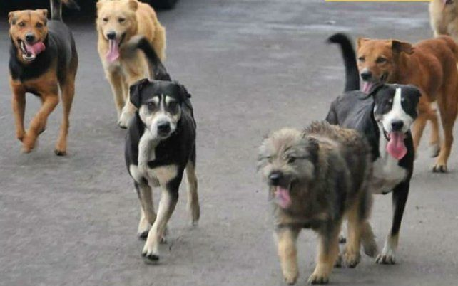 Funes intensifica la campaña para no tener perros sueltos en la calle