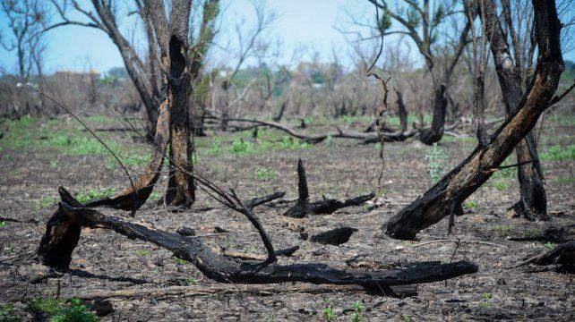Las quemas indiscriminadas en las islas frente a las costas de Rosario motivaron el año pasado una intensa campaña en reclamo de la sanción de la ley de protección de humedales.