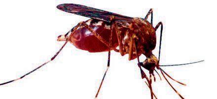 En el Gran Rosario ya son nueve los casos de dengue confirmados
