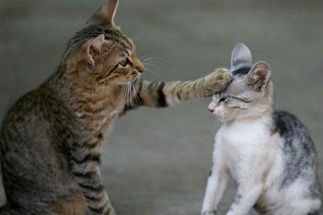 Por qué se celebra el Día Internacional del Gato