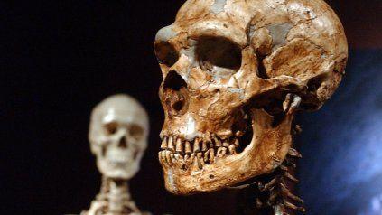 Un esqueleto de Neanderthal. Detrás, uno de un humano moderno.
